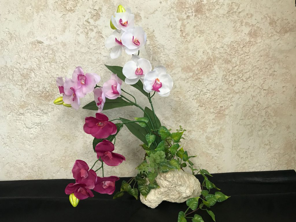 琉球石灰岩アレンジメント胡蝶蘭三色グラデーション