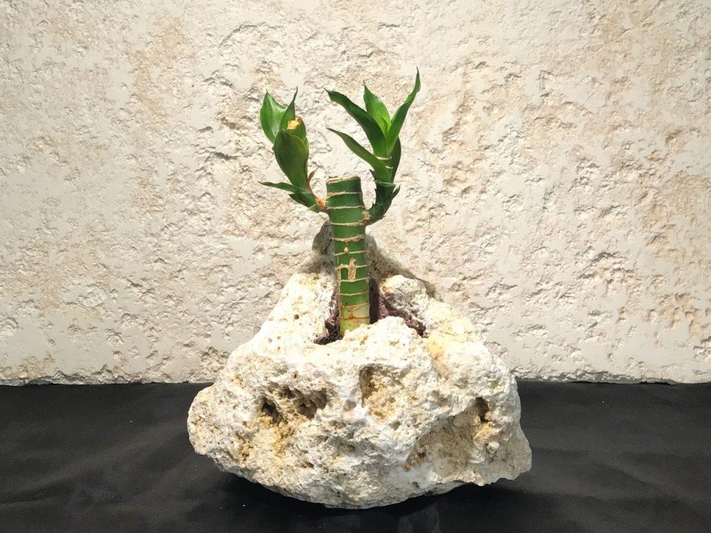 琉球石灰岩アレンジメント作品 幸福の竹