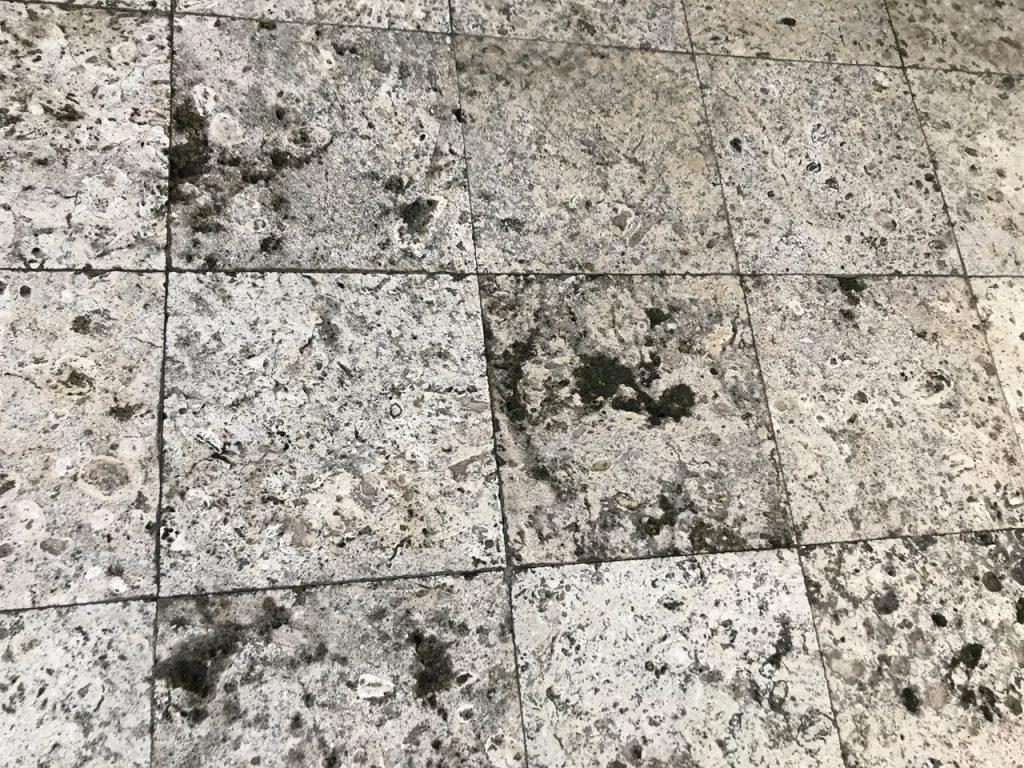 琉球石灰岩Befoer
