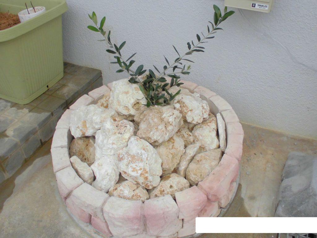 琉球石灰岩アレンジメント 坪庭