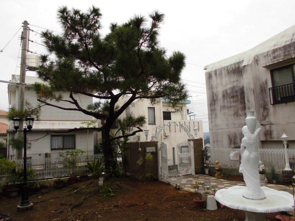 庭の琉球石灰岩の施工前