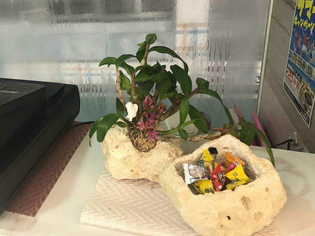 琉球石灰岩アレンジメント 胡蝶蘭とキャンデー入れ