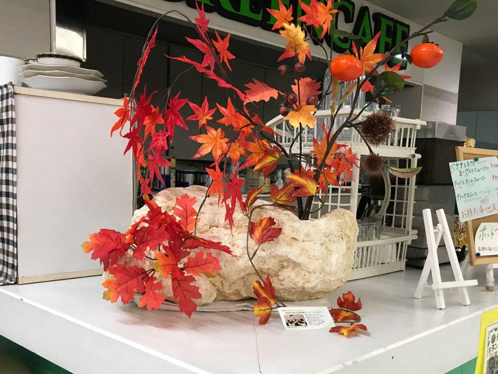 琉球石灰岩と紅葉の秋(もみじ)デスプレー